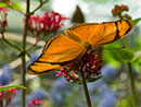 Butterfly Gardening: Wyoming