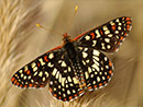 Butterfly Gardening: South Dakota
