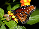 Butterfly Gardening: Oregon