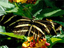 Butterfly Gardening: Arizona