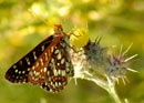 Butterfly Gardening: North Dakota
