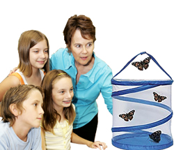 Teachers can buy a live School Size Painted Lady Butterfly raising kit.