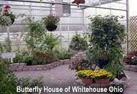 Visit a Butterfly House - listed here by state