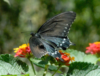 This fun article talks all about where butterflies live. Butterflies live in all sorts of places!