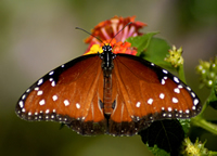 What Better Way To Start A Butterfly Garden Than To Raise Your Own  Butterflies For It? This Can Be An Activity That The Whole Family Can Enjoy  And Learn ...