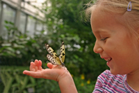 Superb ... Garden Or Farm Near Me. Child Observes Butterfly Close Up At Butterfly  House