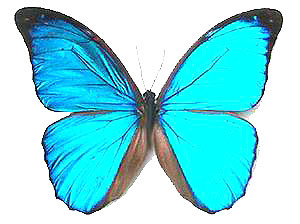 Best quality and selection of unmounted butterflies, papered butterfly specimens and entomology supplies online!